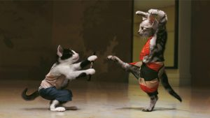 Cats doing martial arts