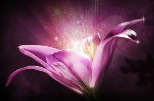 Fleur Centifolia
