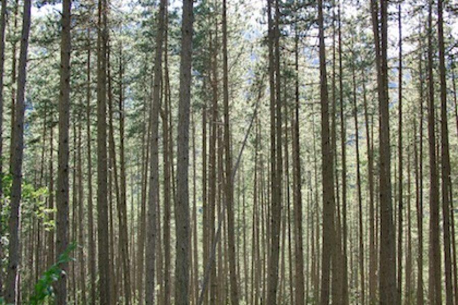 La forêt qui pousse…